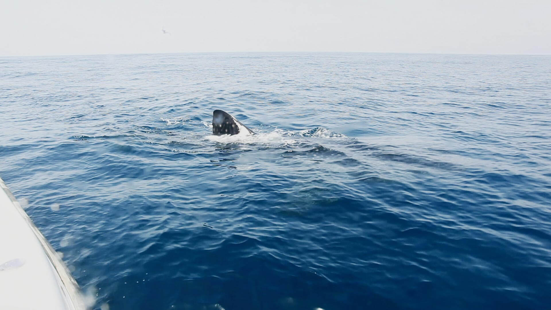 لقطات من زيارة القرش الحوت